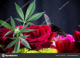 cannabis bouquet with roses marijuana leaves and butterfly