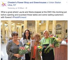 chesters flowers saf wednesday e brief oct 14 2015