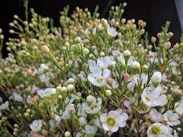 flowers wholesale chavez wholesale flowers inc about us