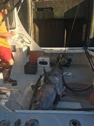 blue fin tuna bite killin u0027 it good sportfishing