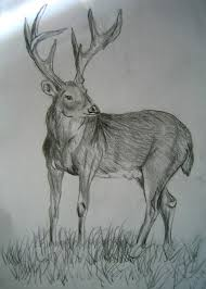 pencil drawing collection drawing art ideas picture collections