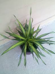 house plants types with pictures identifying home design 2017