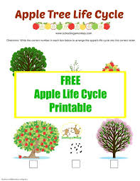 apple activities for kids apple life cycle printable