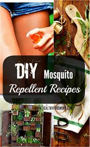 107 best bugs insects to eliminate images on pinterest pest