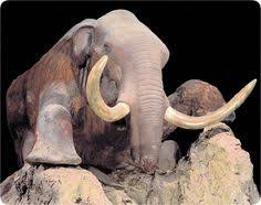 scientists plan clone woolly mammoth extinct