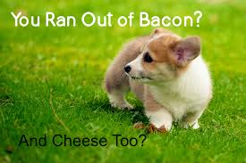 Corgi Puppy Meme - corgi puppy meme out of bacon corgilicious