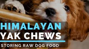 how to store raw dog food meat yaky stick himalayan dog chews