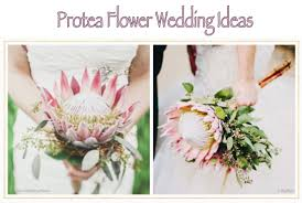 protea flower protea flower wedding ideas mysty and designs