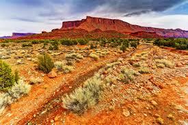 canyon stones desert canyons utah landscape plants rocks grand