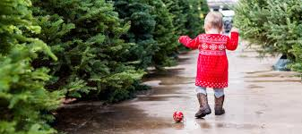 best places to buy a tree in the bay area nearest