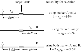 Qtl Mapping Marker Assisted Selection An Approach For Precision Plant