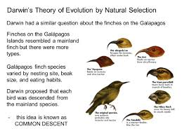 chapter 15 darwin and evolution ppt video online download