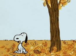 brown thanksgiving autumn gif find on giphy