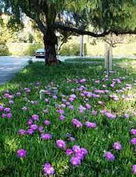 ground cover gardens spain often underrated but a bonus spain info