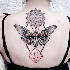 moth back