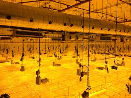 commercial grow room design check out the full selection of the