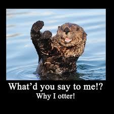 Otter Meme - sea otter meme by artbyjoelk on deviantart