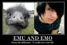 Emo Meme - emo or emu by burning noodles on deviantart