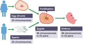 bbc bitesize national 5 biology reproduction revision 4