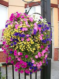 flower baskets living the sweet annual fundraiser supporting the town