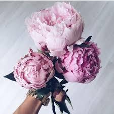 pianese flowers resultado de imagen de peonies gorgeous flowers