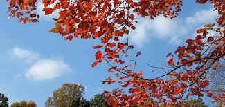fall autumn cool autumn weather reveals nature s true hues national oceanic