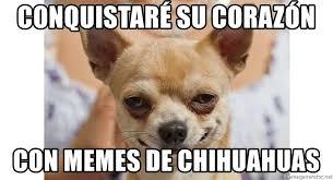 Memes De Chihuahua - conquistaré su corazón con memes de chihuahuas sexy chihuahua