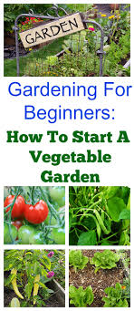 how to start a vegetable garden for beginners how to start a spring vegetable garden
