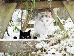 cat yard peeping tom outdoor yard garden ornament