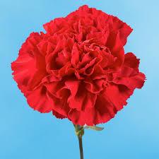 amazon com globalrose 200 fresh cut red carnations fresh