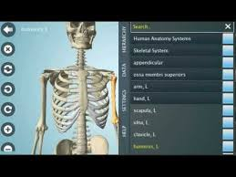 Interactive 3d Anatomy Anatronica Interactive 3d Anatomy For Android Phones Tablets Youtube