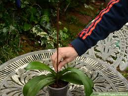 What Is An Orchid Flower - how to repot an orchid 14 steps with pictures wikihow