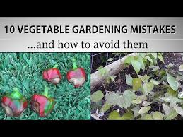the most common vegetable gardening mistakes and how to avoid them