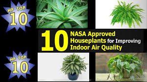 nasa verified houseplants for improving indoor air quality 2016