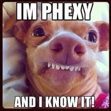 Dog Teeth Meme - phteven meme google search tuna pinterest meme