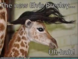 Uh Huh Meme - the new elvis presley uh huh i can has cheezburger funny