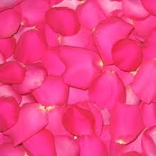 Rose Petals How To Make Rose Petal Perfume Leaftv