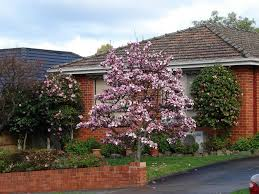 Decorative Shrubs Ornamental Tree Care U2013 How To Use Ornamental Trees In Landscape