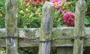Types Of Garden Flowers - fence types of garden fence favorable u201a stunning types of garden