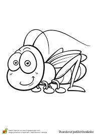 Coloriage insecte et petite bestiole une sauterelle  Hugolescargot