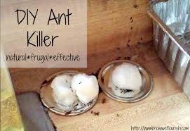 Natural Ant Killer For Kitchen by Homemade Ant Killer How We Flourish