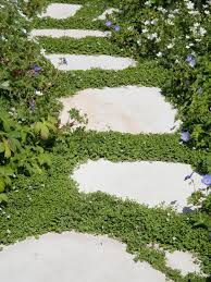 Alternatives To Grass In Backyard by Ideas For Groundcover Alternatives To Grass Hgtv