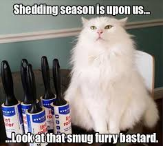 White Cat Meme - fluffy white cat meme white best of the funny meme