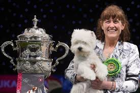 affenpinscher crufts 2014 who won crufts 2016 here are all the winners from birmingham dog