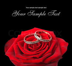red rose rings images Wedding rings and on a red roses stock photo colourbox jpg