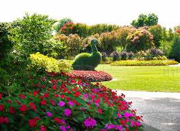 Dallas Arboretum And Botanical Garden 7 11 14 Peacock Topiary In The Jonsson Color Garden Jpg Dallas