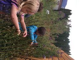 notes from the primary u2013 garden city montessori