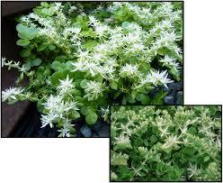 native plant finder plant finder hinsdalenurseries com
