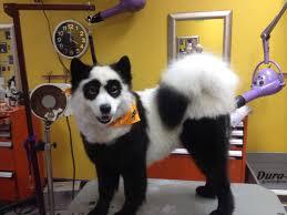 happy halloween funny happy halloween panda samoyed random d pinterest panda