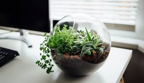 plant for office 7 beautiful office plants you couldn t kill if you tried inc com